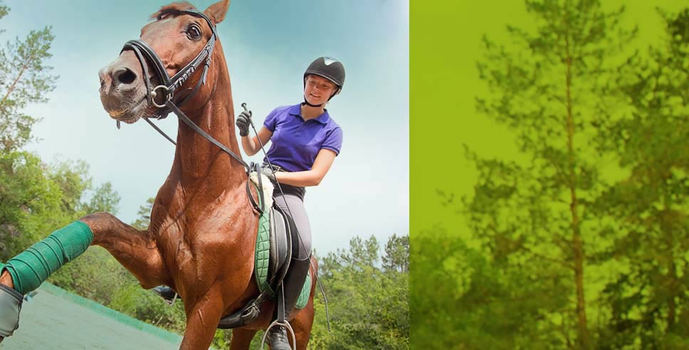 Horse Riders - Advanced GPS Safety and Tracking - Ridersmate